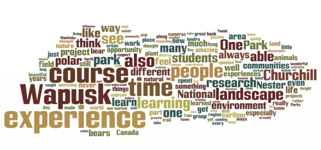 Course Reflections Wordle